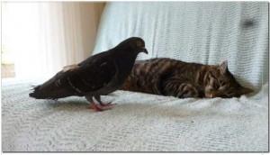 pousset-pigeon-02