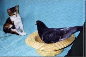 pousset-pigeon-04
